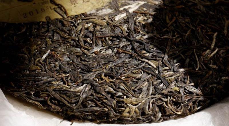 jingmai-nanzuo-shengtai-puerh-tee-teekauppa-4